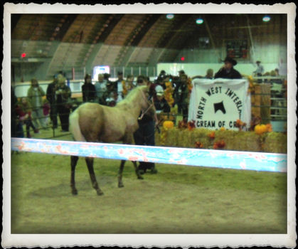 Angel at the Cream of the Crop Sale & Futurity Show September 2012